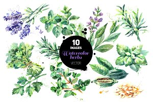 Watercolor Herbs Vector Set