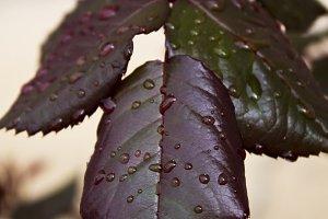 leaf with dew drop