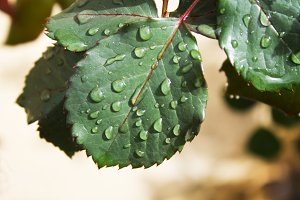 leaf with dew drop