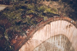Details of a mossy Trunk in Spring