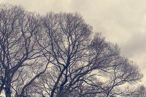 Tree Crowns (Vintage Look)