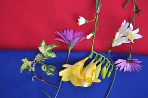 flowers on blue and red cloth