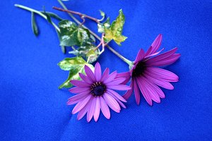 flowers on blue cloth