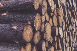 Details of Wood Logs (Background)
