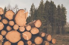 Pile of Wood Logs in front of Forest