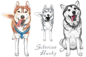 Dog Siberian Husky SET