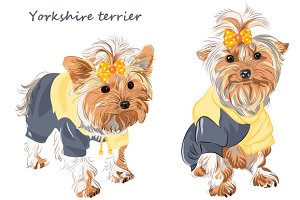 Dog Yorkshire terrier SET 1