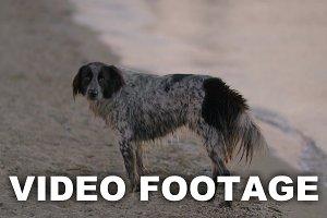 Stray dog wandering at the seaside