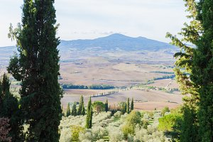 Tuscany landscape with cypress trees
