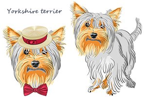 Dog Yorkshire terrier SET 2