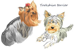 Dog Yorkshire terrier SET 3