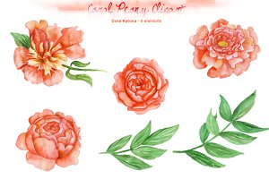 Watercolor Coral Peony Clipart