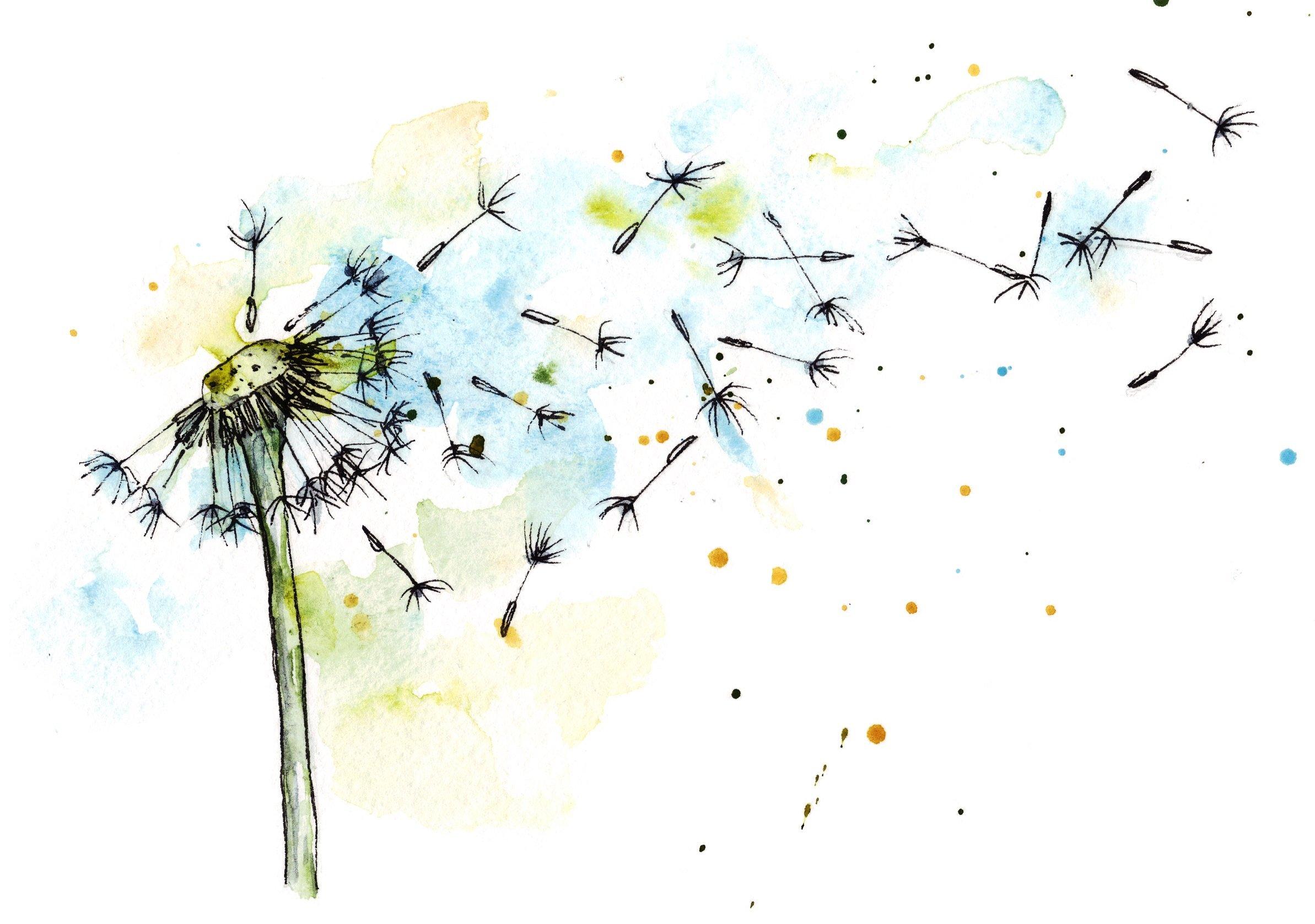 dandelion in watercolor and ink illustrations creative market. Black Bedroom Furniture Sets. Home Design Ideas