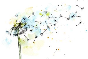 Dandelion in watercolor and ink