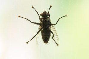 Fly on the glass