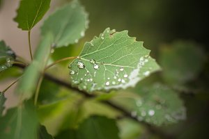 Drops on a leaf