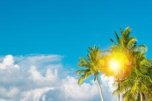 Green palm trees sunny sky