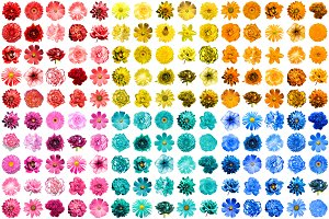 Mega pack of 150 flowers isolated