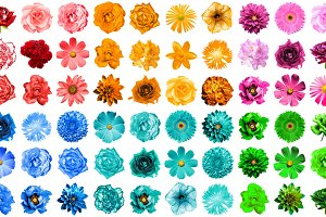 Mega pack of 72 flowers isolated