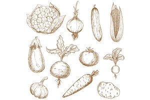 Fresh vegetables hand drawn sketches