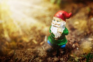 Dreamy garden dwarf in sun light