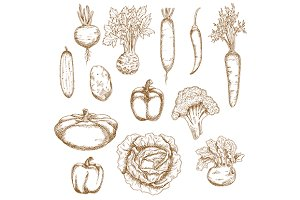 Sketch vegetables icons