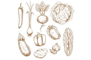 Vintage sketches of vegetables