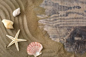 Starfish and shells on sand