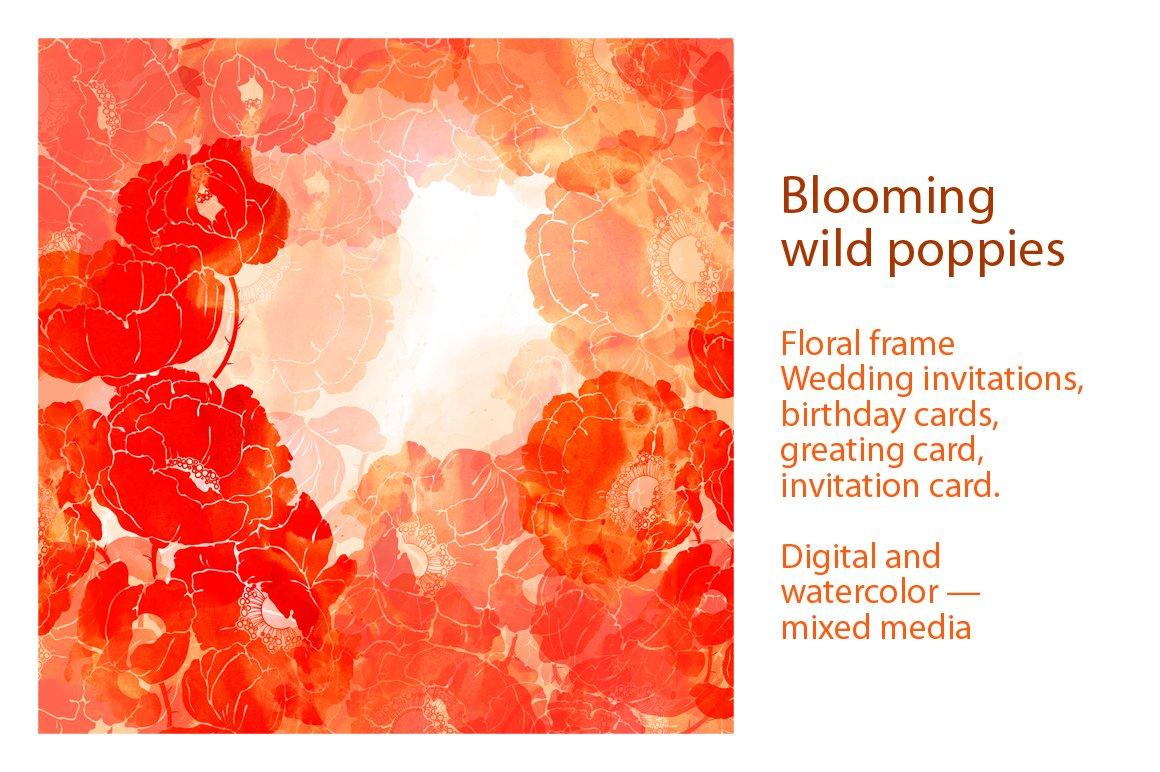 Blooming wild poppies ~ Illustrations ~ Creative Market