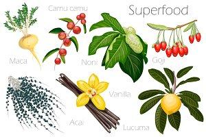 Vector illustration of a super food