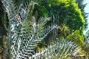 Thorny cactus plant