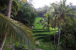 Landscape from Bali,Indonesia
