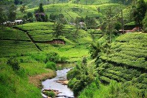 Landscape from Sri Lanka