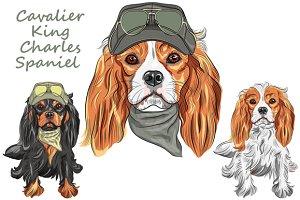 Cavalier King Charles Spaniel SET 1
