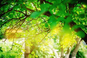 Green background with fresh leaves
