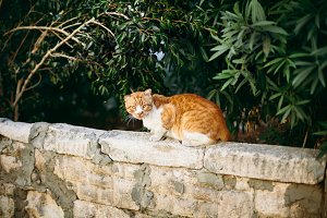 Red wild cat sitting on the stone