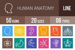 50 Human Anatomy Line Multicolor