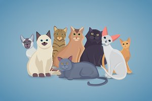 Collection cute Cats