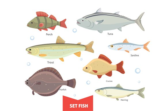 Collection Fish