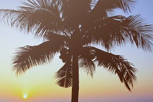 Coconut palm tree with sunrise