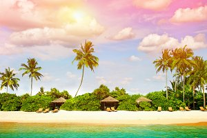 Paradise island with palm trees