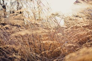 Brown Grass and Sun