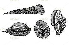 Set of shells.