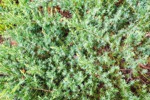Green vegetative background