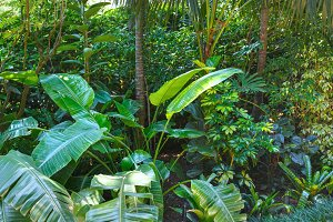 Subtropical plants