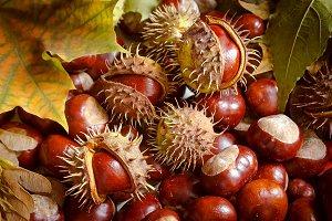 Autumn. Chestnuts.
