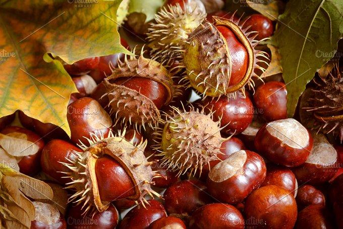 Autumn. Chestnuts. - Photos