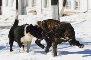 Two dogs playing in snow