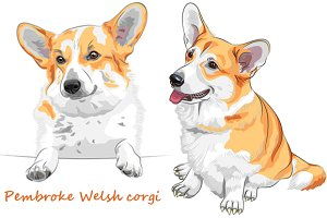 Dog Pembroke Welsh corgi