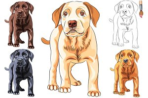 Puppy dog Labrador Retriever SET